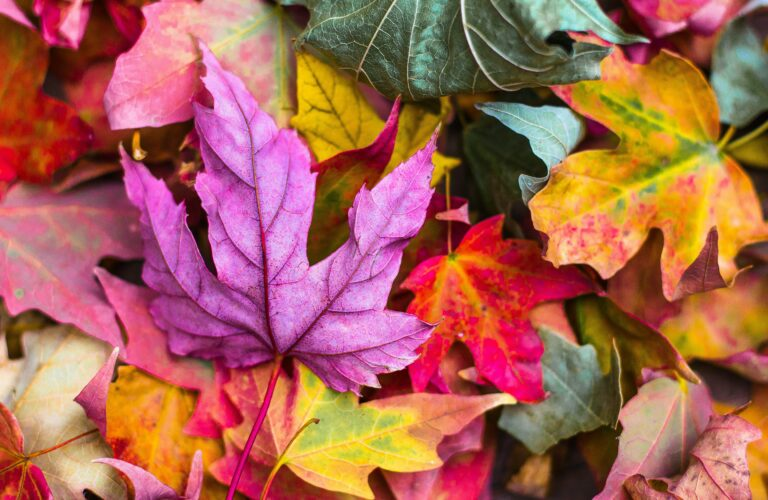 5 Heartwarming Activities for Grandma to Enjoy All the Colors of Autumn